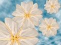 Moth Flowers